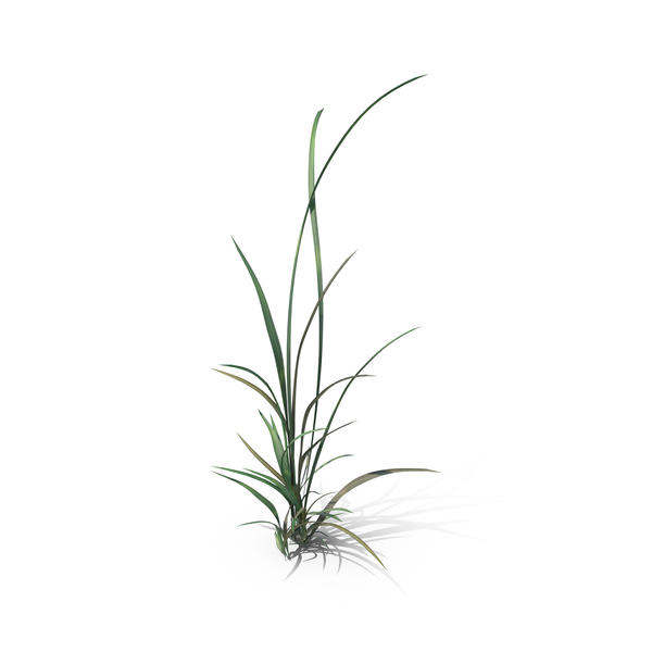 Grasses: Simple Grass PNG & PSD Images