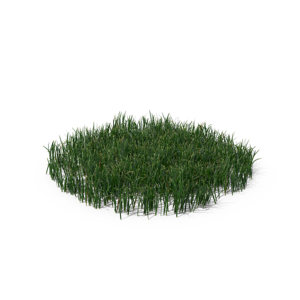 Grasses: Simple Grass (Large) PNG & PSD Images