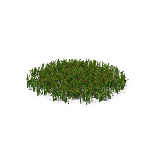 Grasses: Simple Grass Medium PNG & PSD Images