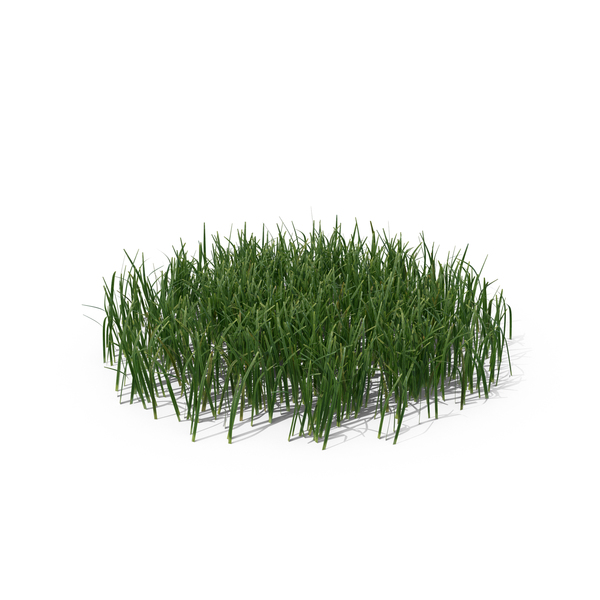 Simple Grass (Medium) PNG & PSD Images