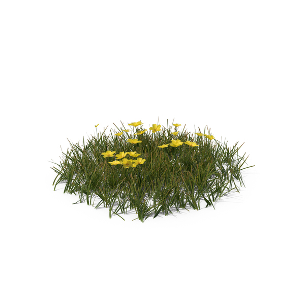 Simple Grass with Flowers (Medium) PNG & PSD Images