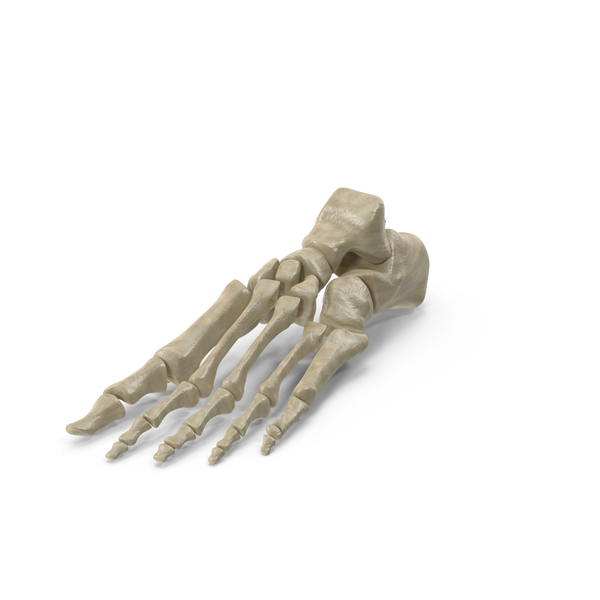 Skeletal Foot PNG & PSD Images