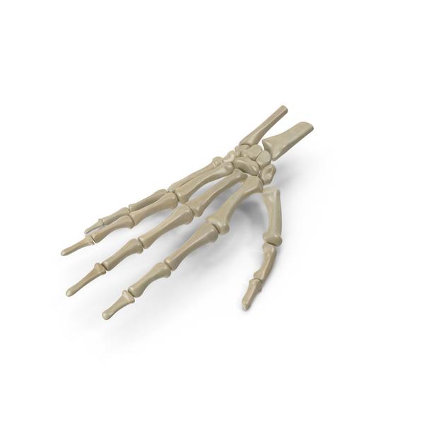 Skeletal Hand PNG & PSD Images