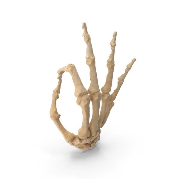 Hand Gestures: Skeletal Ok Sign PNG & PSD Images