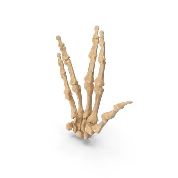 Skeletal Vulcan Salute PNG & PSD Images