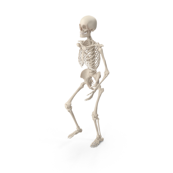 Male: Skeleton Climbing Stairs PNG & PSD Images
