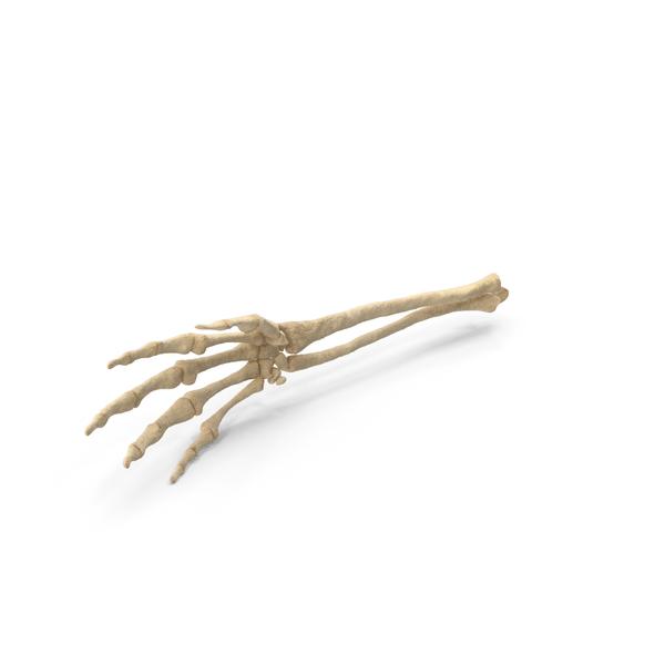 Skeleton Hand PNG & PSD Images