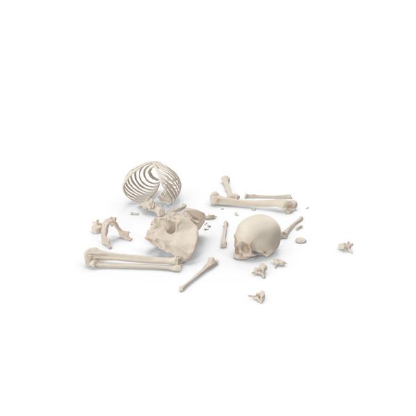 Male: Skeleton Scattered Bones PNG & PSD Images