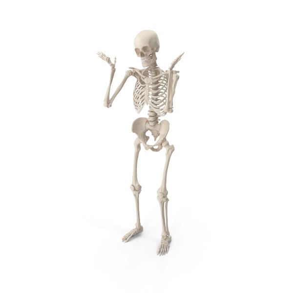 Male: Skeleton Shrug PNG & PSD Images