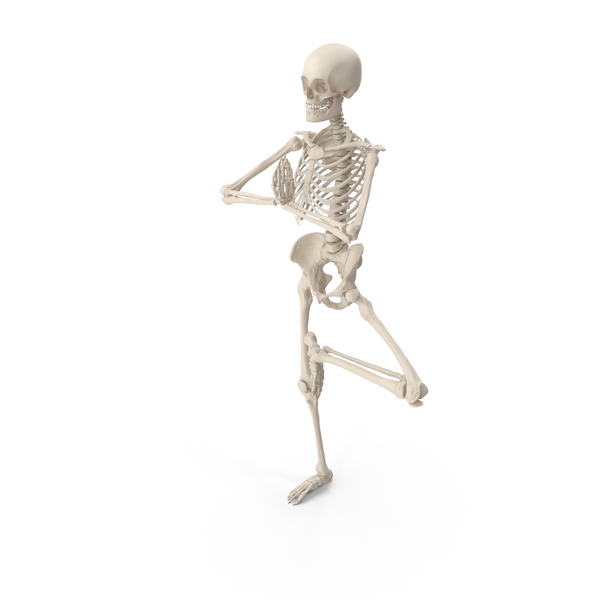 Male: Skeleton Tree Pose PNG & PSD Images