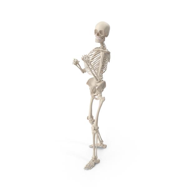 Skeleton Vintage Boxer PNG & PSD Images