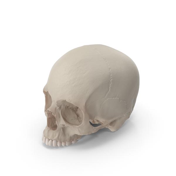 Skull Object