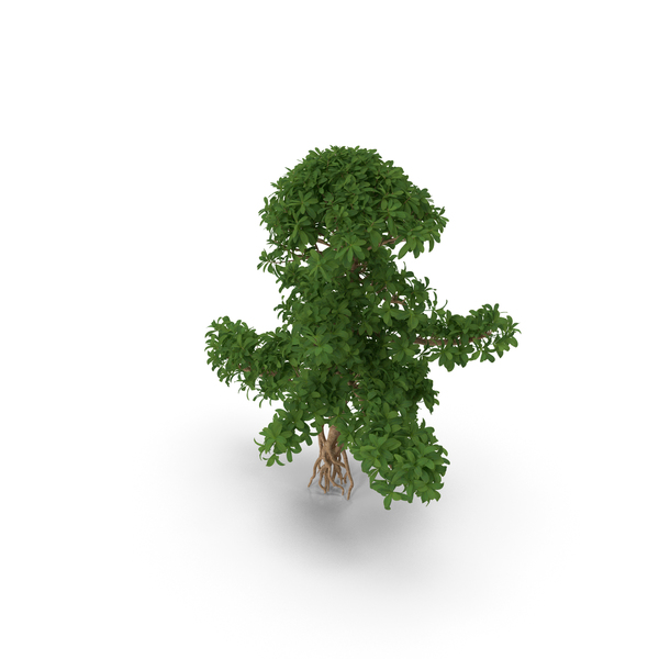 Small Bonsai Green Tree PNG & PSD Images