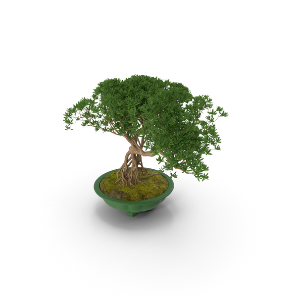 Small Bonsai in Pot PNG & PSD Images
