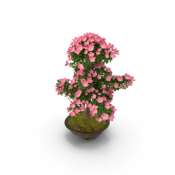 Small Bonsai Tree with Flowers in Pot PNG & PSD Images