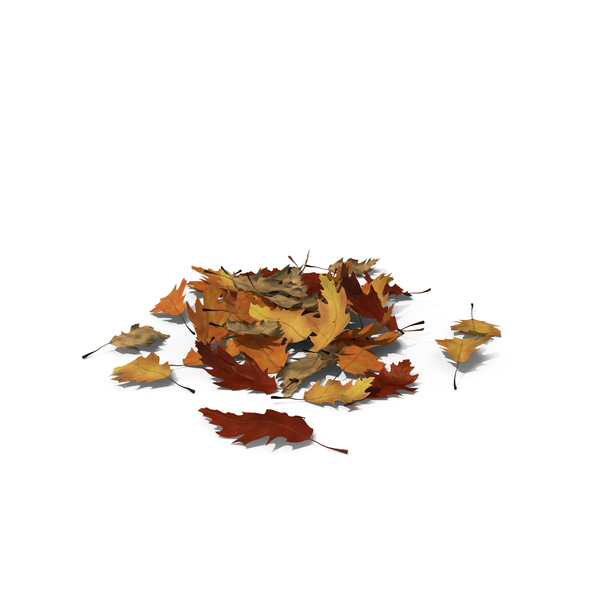 Leaf: Small Pile of Oak Leaves PNG & PSD Images