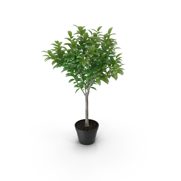 Small Tree In A Pot PNG & PSD Images