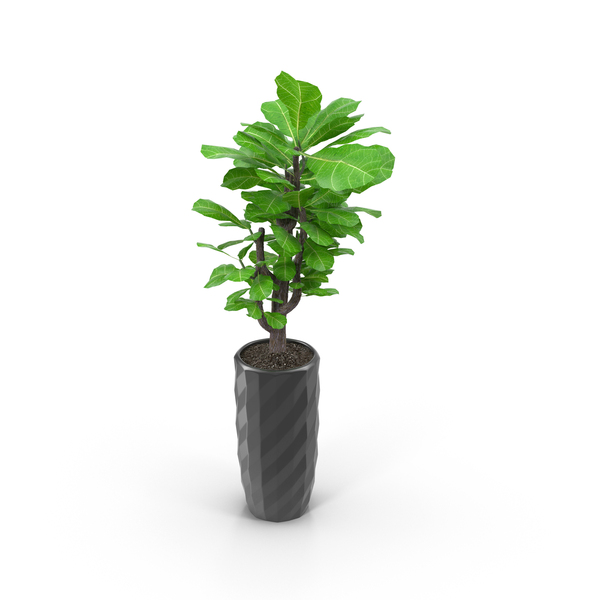 Flower: Small Tree in Mirrored Pot PNG & PSD Images