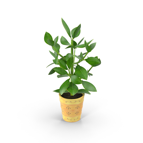 Flower Pot: Small Tree in Planter PNG & PSD Images