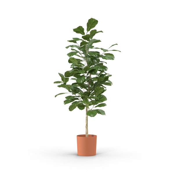 Small Tree in Pot PNG & PSD Images