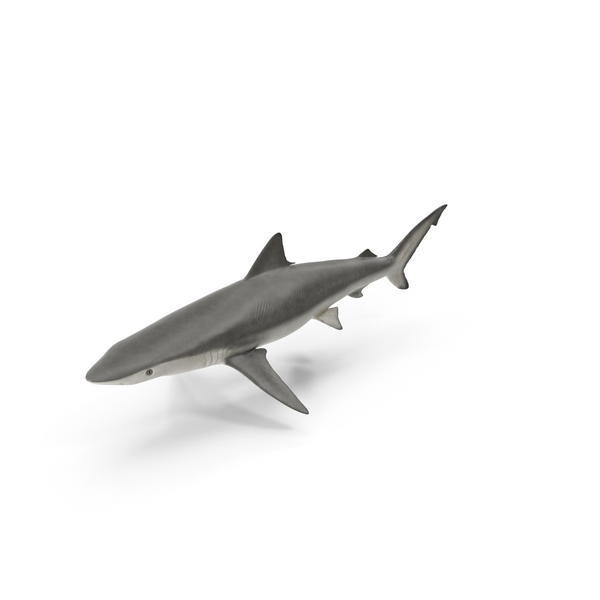 Smalltail Shark Object