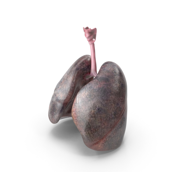 Smoker Lungs PNG & PSD Images