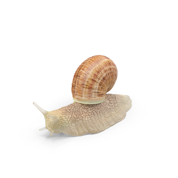 Snail PNG & PSD Images