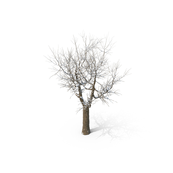 Snowy Tree PNG & PSD Images