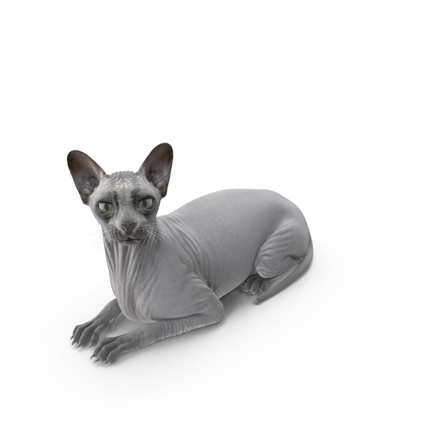 Sphynx Cat Black PNG & PSD Images
