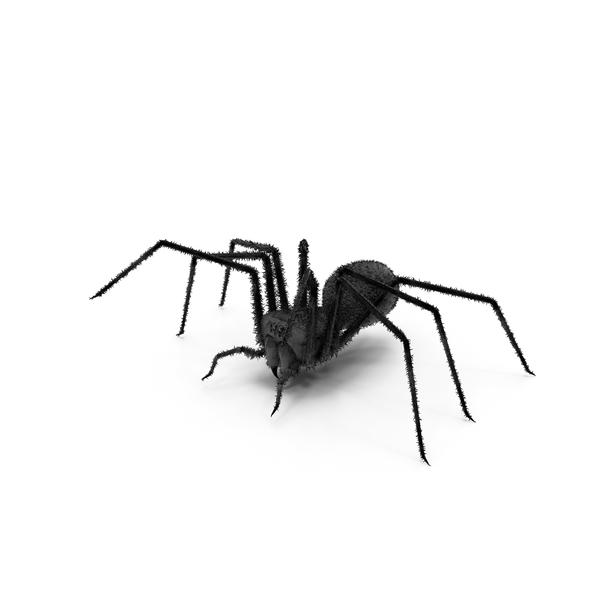 Spider black PNG & PSD Images