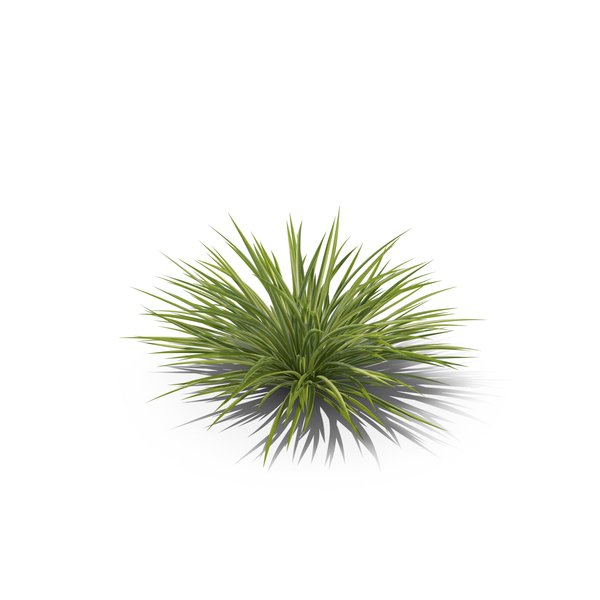 Spider Plant PNG & PSD Images