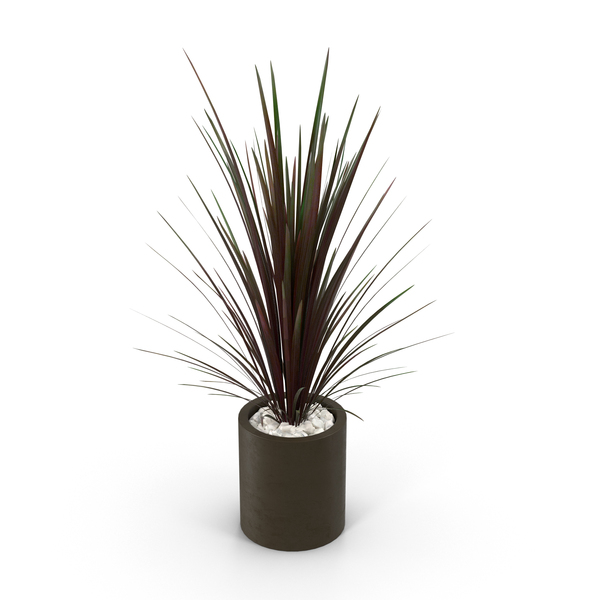 Spiky Red Plant in Brown Pot PNG & PSD Images