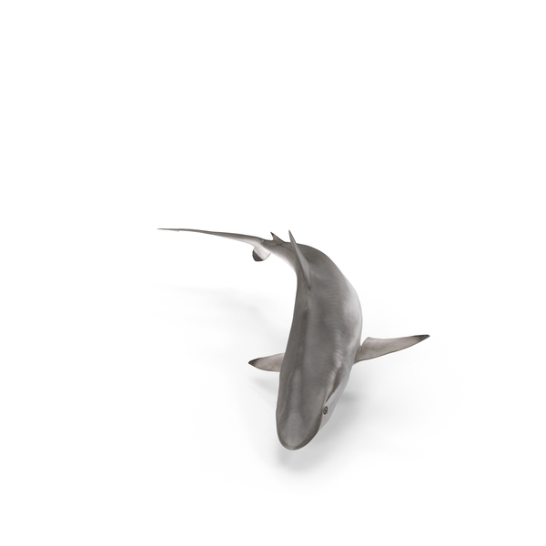 Spot-tail Shark Object