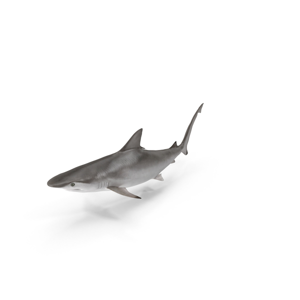 Spottail Shark Object