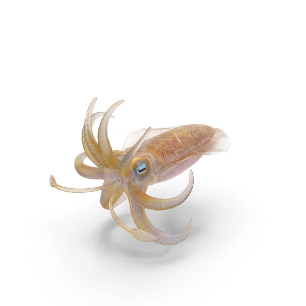 Squid Object