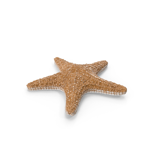 Sea Star: Starfish PNG & PSD Images