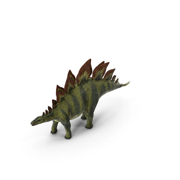Stegosaurus PNG & PSD Images