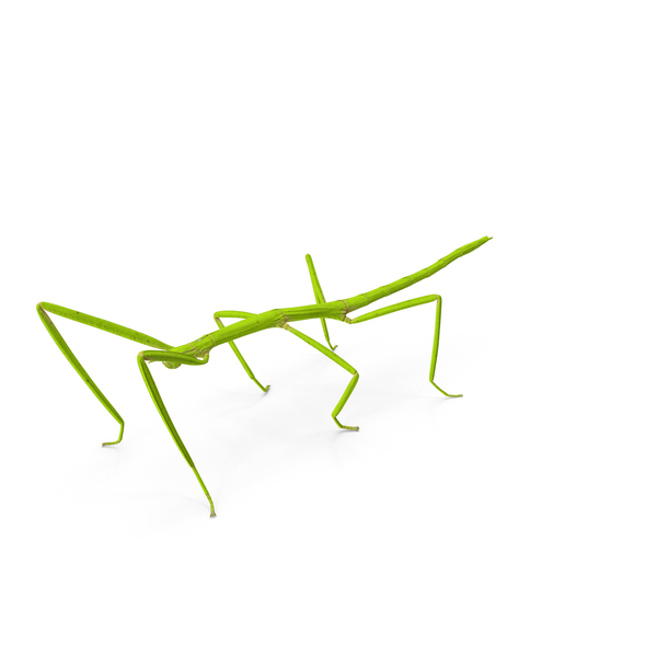 Stick Insect Green PNG & PSD Images