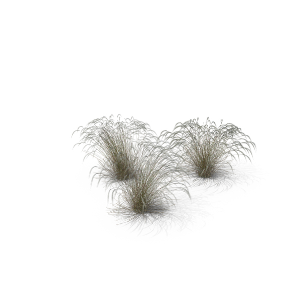 Stipa Grass PNG & PSD Images