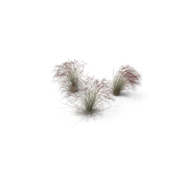 Grasses: Stipa Grass PNG & PSD Images