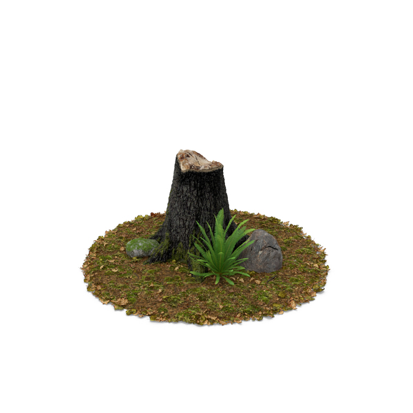 Stump Fern and  Rock PNG & PSD Images