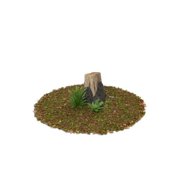 Tree: Stump with Ferns PNG & PSD Images