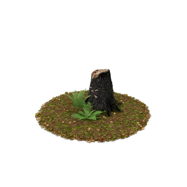 Stump with Ferns Object