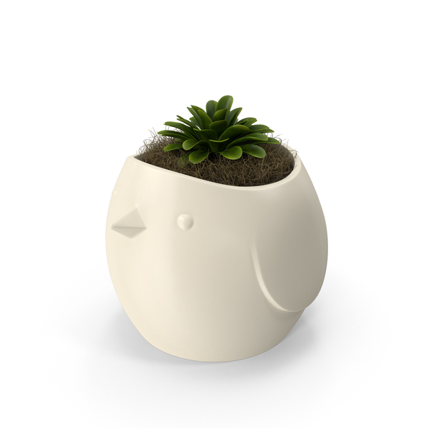 Succulent in a Pot PNG & PSD Images