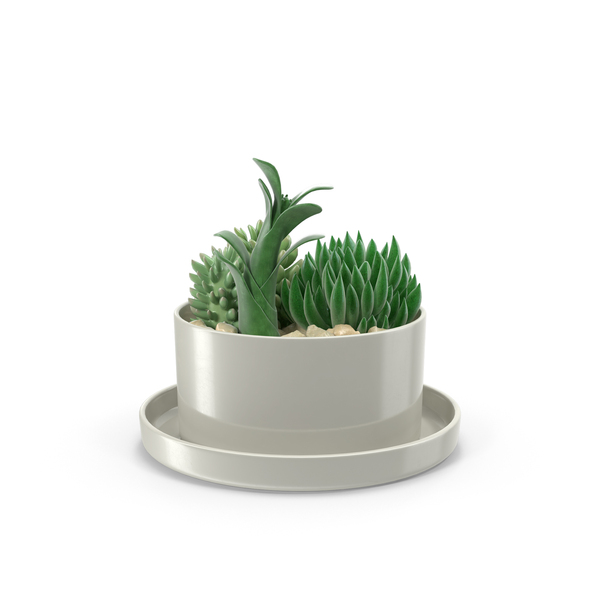 Succulents in Pot PNG & PSD Images