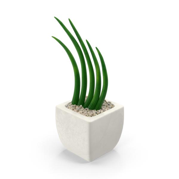 Succulents PNG & PSD Images