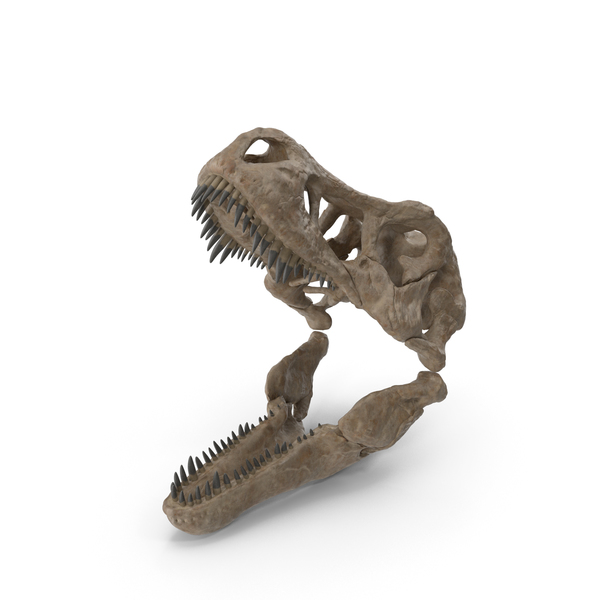 T Rex Skull Fossil PNG & PSD Images
