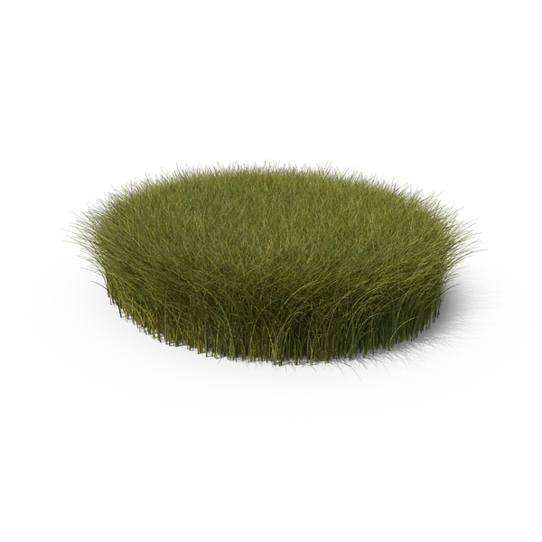 Grasses: Tall Grass Patch PNG & PSD Images