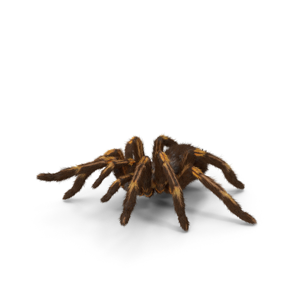 Tarantula Yellow Attack Pose PNG & PSD Images