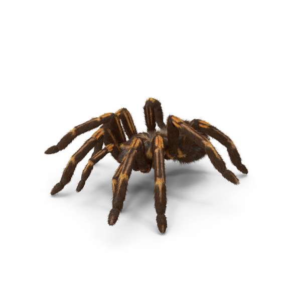 Tarantula Yellow Moving Pose PNG & PSD Images